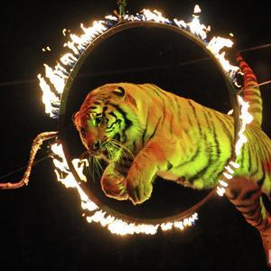Цирки Богородска