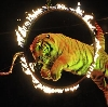 Цирки в Богородске