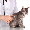 Ветеринарные клиники в Богородске